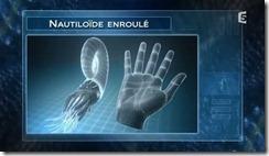 nautiloide2