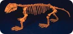 lystrosaure