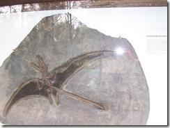 Eudimorphodon[3]