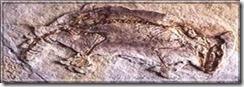 Megazostrodon ng_fosil