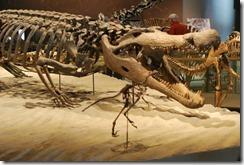 deinosuchus-large