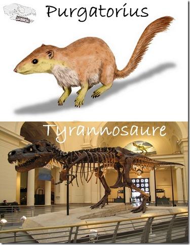 Purgatorius & tyrannosaure