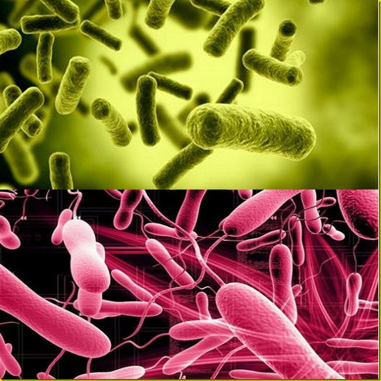 peste cholera